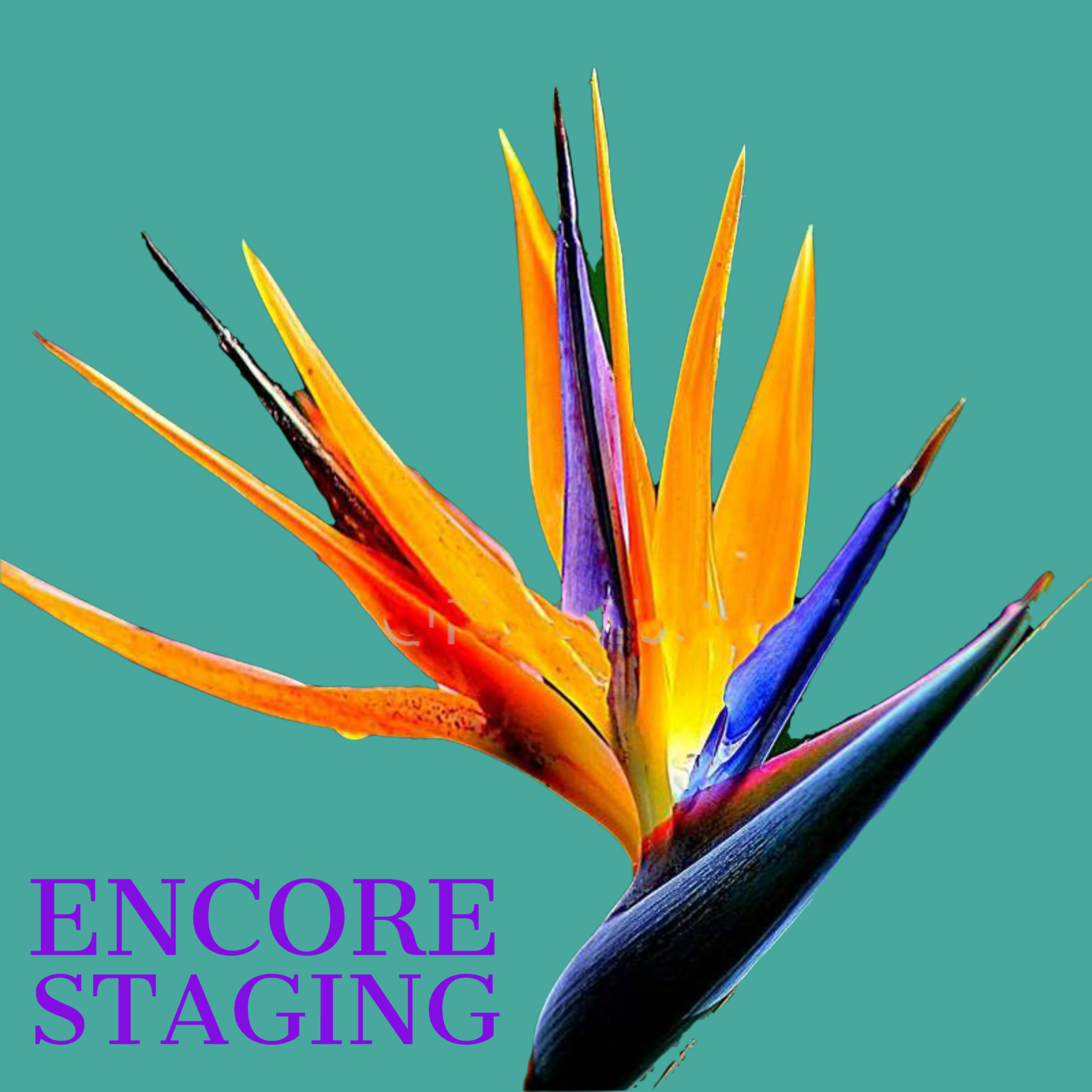Encore Staging
